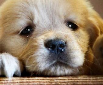 tax deductible dog