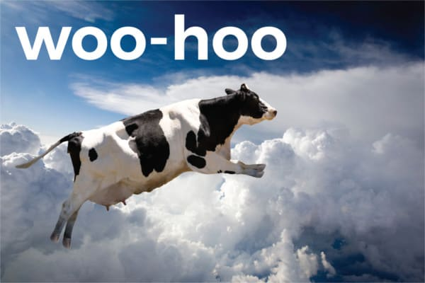 woo hoo cow