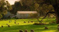 farm exemption thumbnail